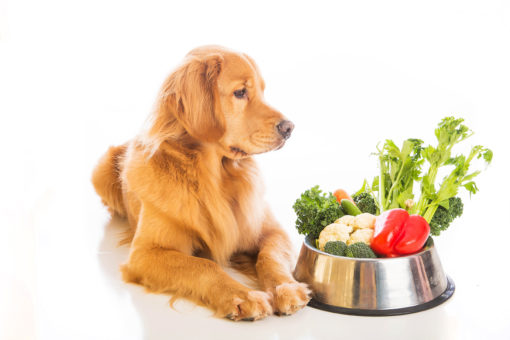 Canine Nutrition Course